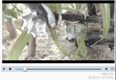 dvdfab-videoconverter073